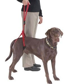 Bottom's Up Leash. Hhind-leg support harness for dogs with hip ...