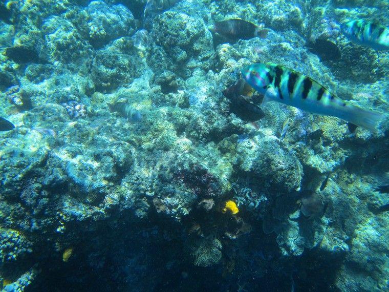 Pulau Bunaken Keindahan Dunia Alam Bawah Laut Yang Dunia Alam Pulau
