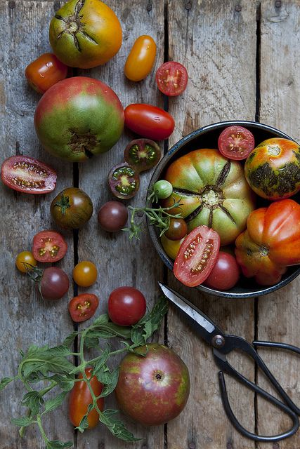 Tomatoes | Tamaties #vegetables #trending