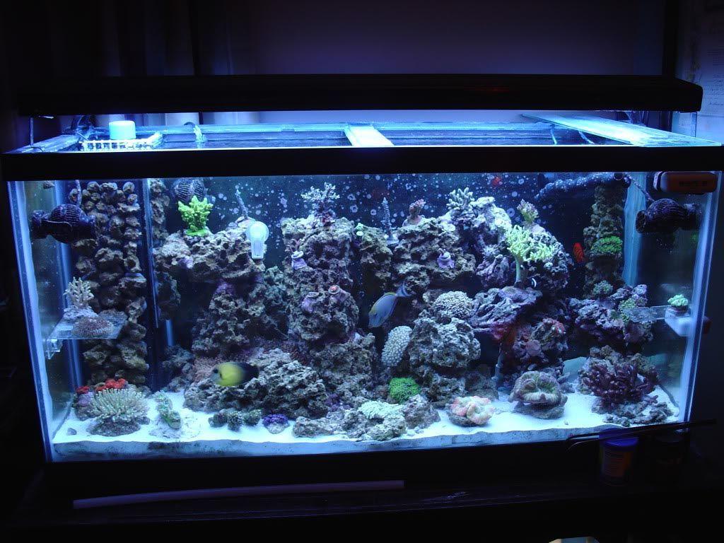 All glass aquarium fish tank - 90 Gallon Glass Aquarium Aquarium Design Ideas
