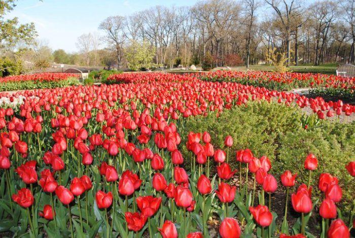 0fe7fadcea8d1baa909682cd919d25e5 - Wellfield Botanic Gardens In Elkhart Indiana