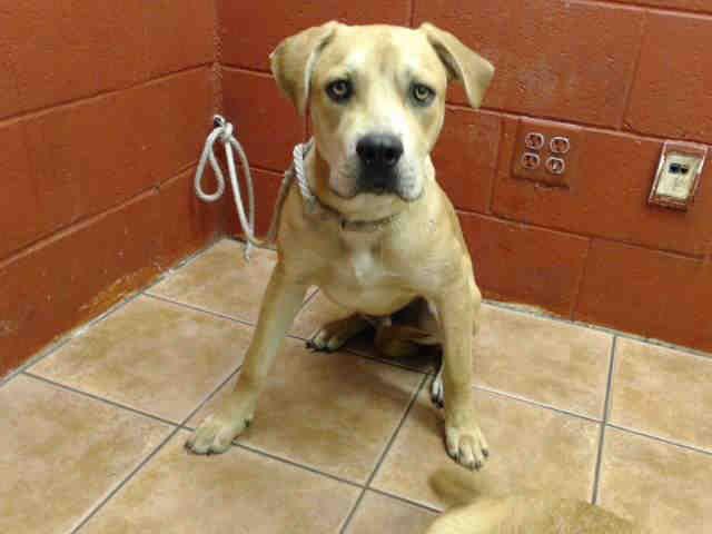 Gayweho Dogs 4 U On Pitbull Terrier Dogs Nkla