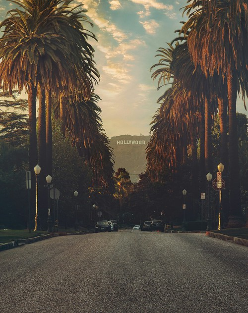 California Dreamin: Hollywood Sign + Palm Trees with an LA ...