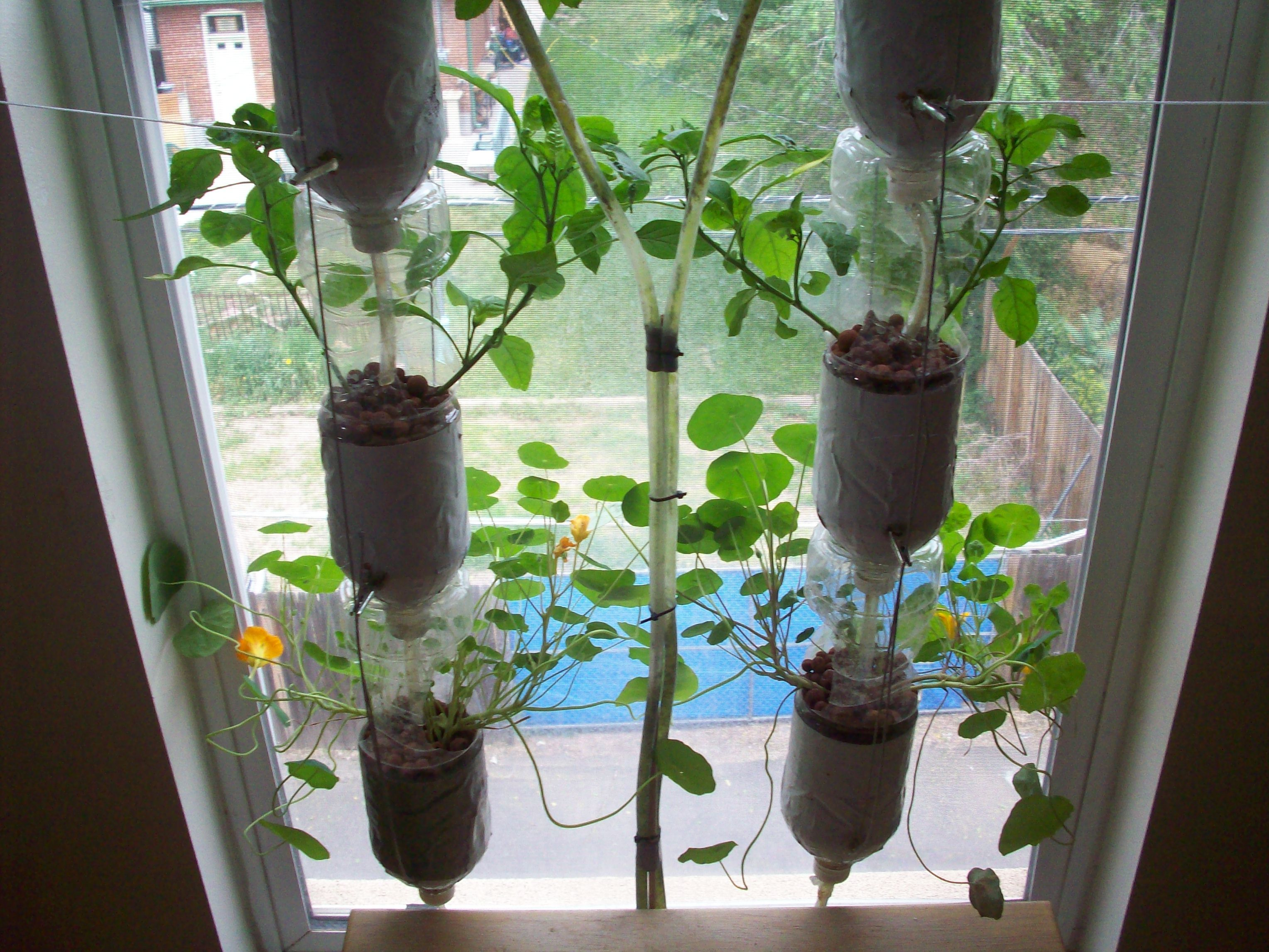 DIY: Http://www.windowfarms.org/buildyourown · Window Herb GardensKitchen  ...