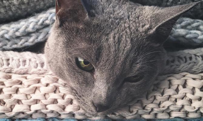 Katzenhaare Entfernen katzenhaare entfernen tipps und tricks gegen tierhaare