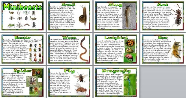 Minibeast Facts Poster Set  Includes Information About