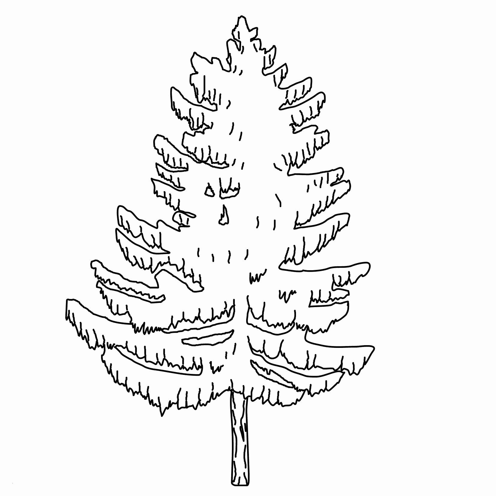 Tree Coloring Page Inspirational Inspirational Pine Tree Coloring