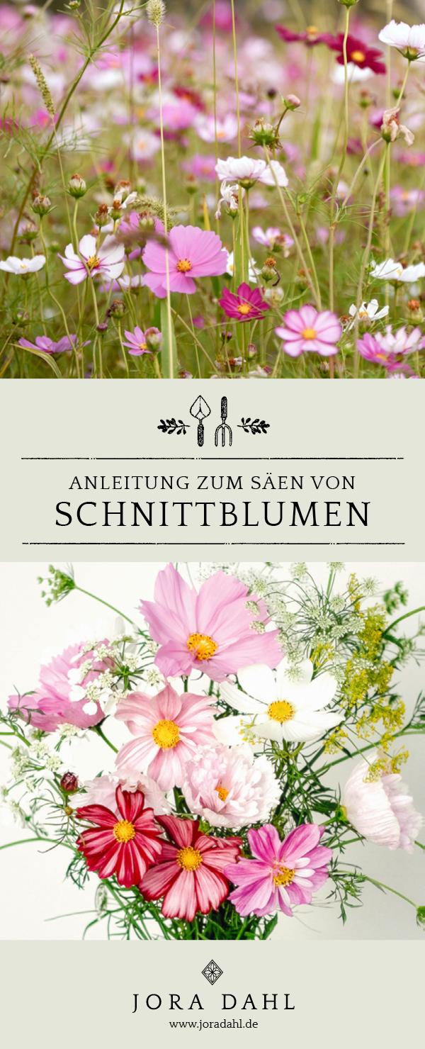 Anleitung zum Säen von Schnittblumen