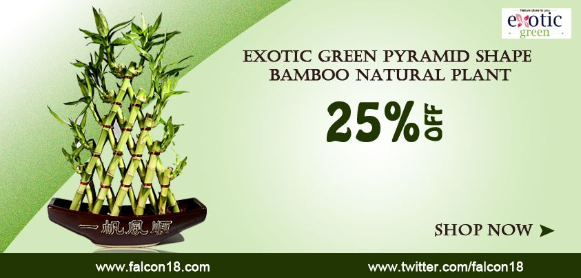 Give a beautiful look to your home with this different looking Exotic Green Pyramid Shape #Bamboo Natural Plant.  Bring greenery, prosperity and health to your home!   Order now:-http://www.falcon18.com/Exotic-Green-Pyramid-Shape-Bamboo-Natural-Plant.htm?1039063/BM85471045