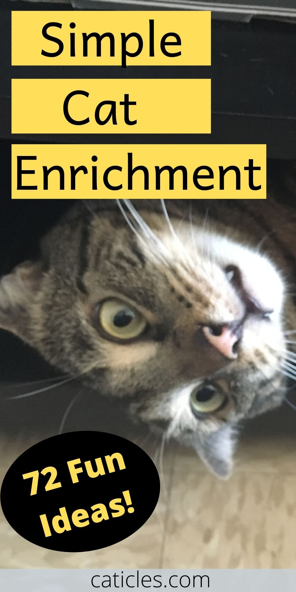 Environmental Enrichment for Cats 72 Things You Need to
