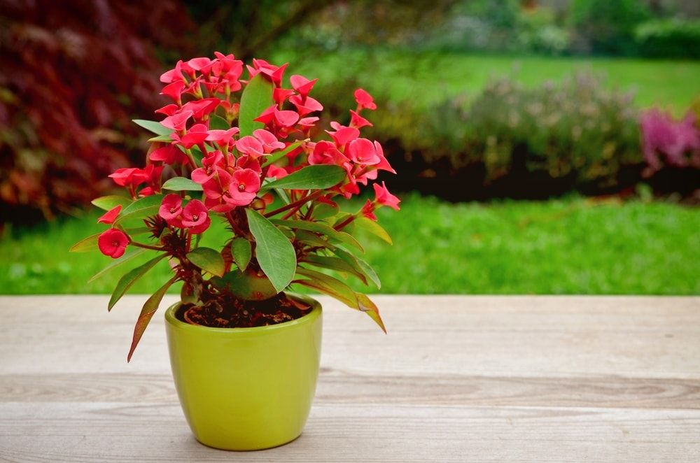 23 Plantes Difficiles A Tuer Qui Vont Purifier L Air De La Maison