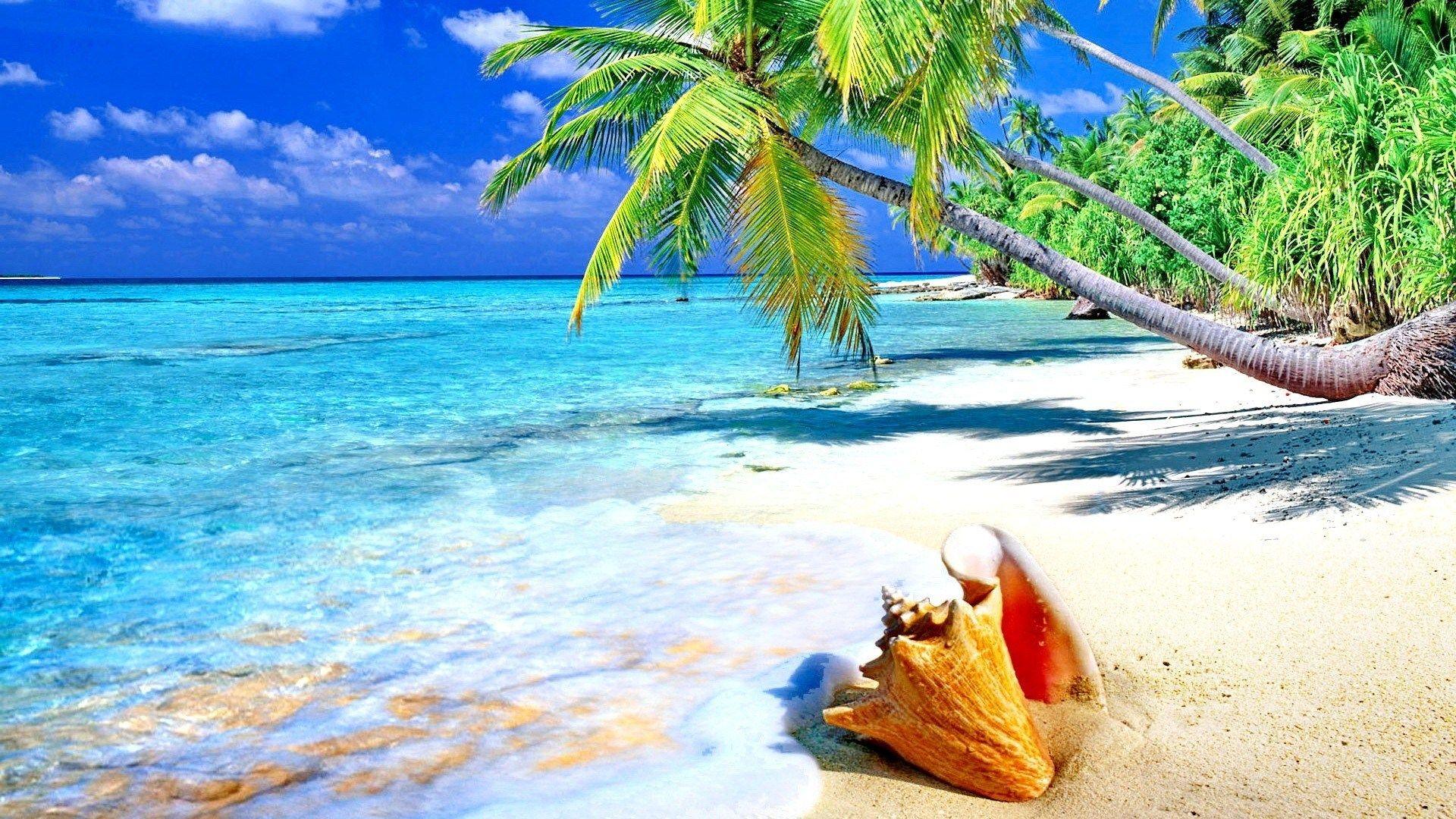 Download Gambar Pemandangan Alam Pantai 2251 Gambar Pemandangan