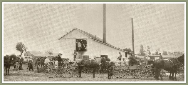 People came from all over the area by horse and buggy to purchase  goods at the Norwalk Creamery in Norwalk, California 1890