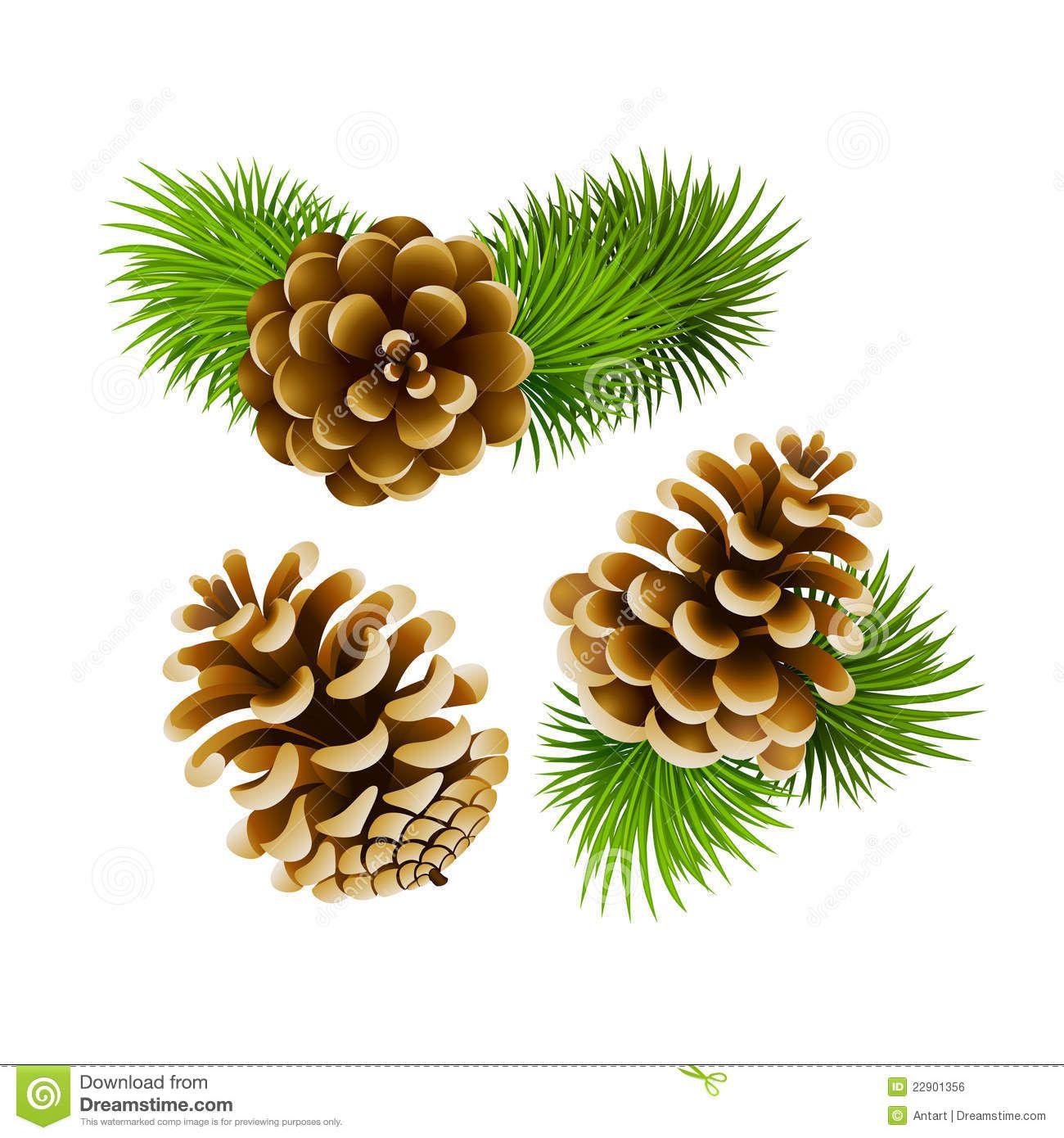 Gymnosperm Pine Illustration Google Search Imagenes De Navidad Fondos Pintar En Tela Imagenes De Navidad