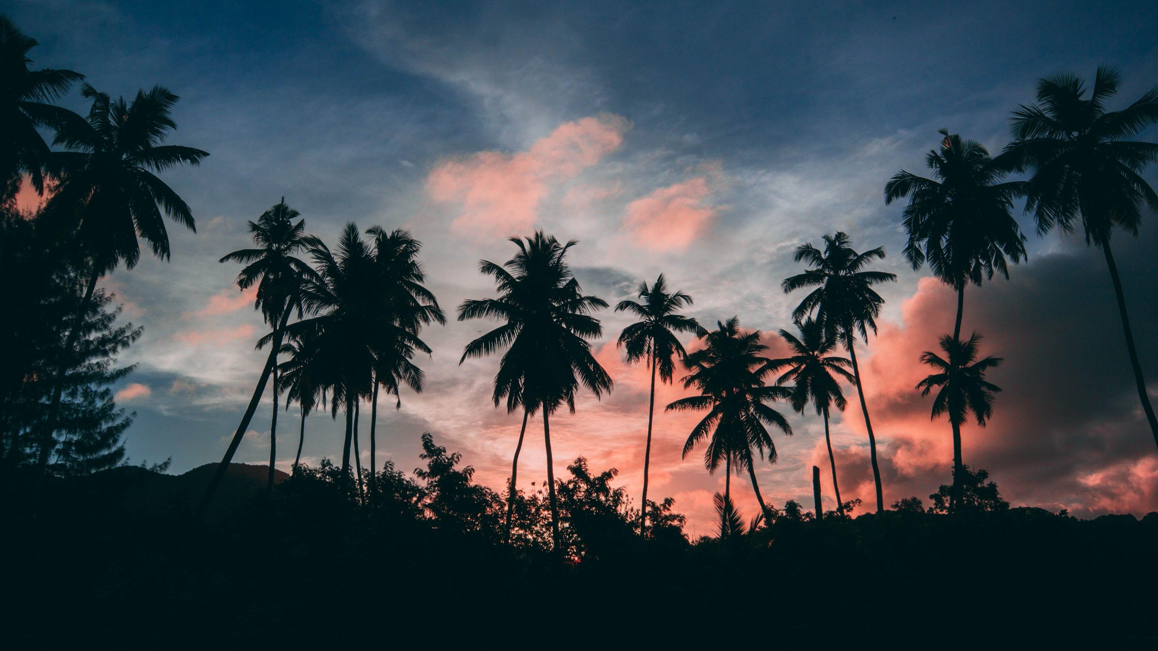 Silhouette Palm Tree Dusk Palms Evening Sky Tropical Sunset Palm Sunset Twilight California Iphone Wallpaper Sunset Wallpaper Abstract Iphone Wallpaper
