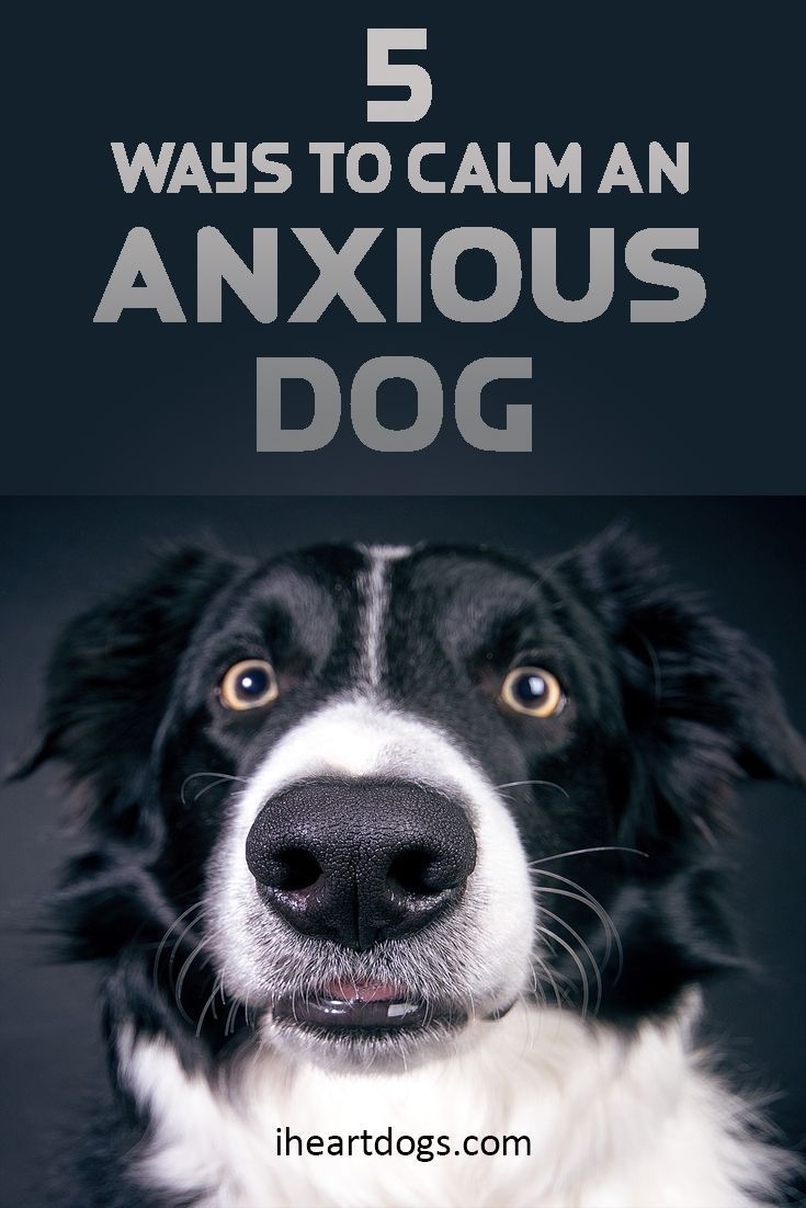 ways to calm an anxious dog fur baby pinterest perros