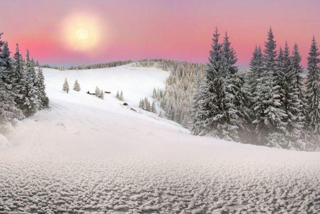 Ukraine Winter Spruce Forest Landscapes Wallpaper Mural