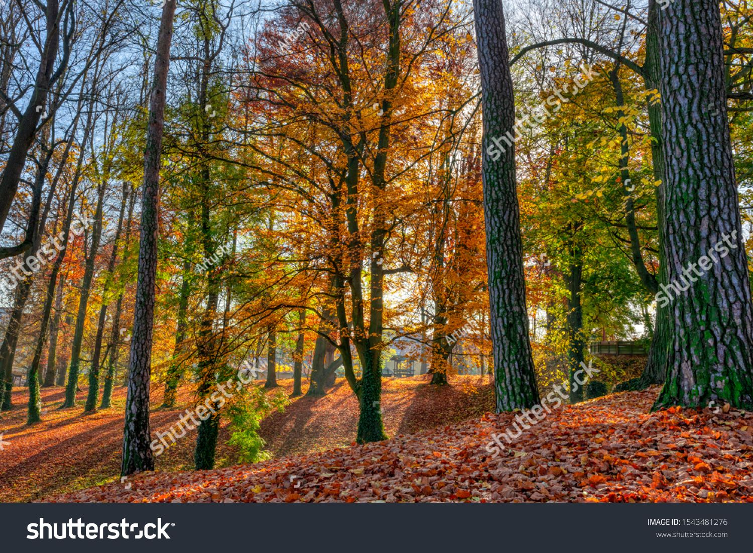 Romantic fall colored park with trees and morning sunlight. Autumn season natural background. Fall concept in park. Vivid colorful natural scene. Europe #Ad , #spon, #morning#trees#Autumn#sunlight