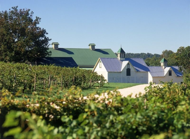 Boordy Vineyards In Hydes Md Near Baltimore We Love Going Up There