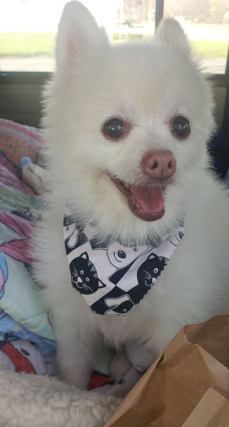 Adopt Tootie On Petfinder Small Dog Rescue Cute Little Dogs Dog Adoption