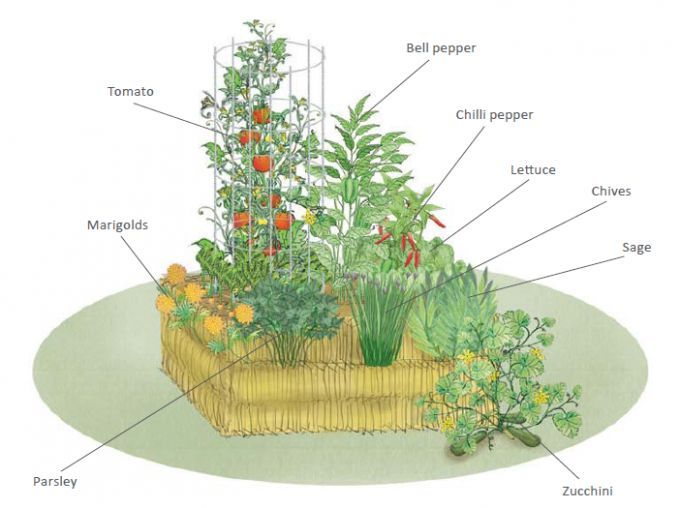 Tips To Get Started With Straw Bale Gardening Save Gardening
