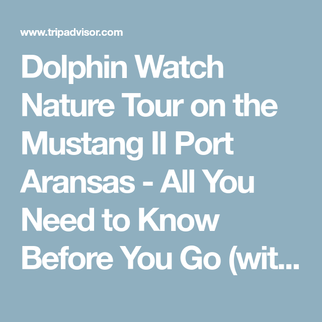 Dolphin Watch Nature Tour On The Mustang Ii Port Aransas All You