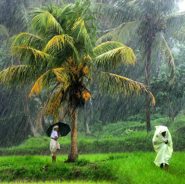 Monsoon Holidays In Kerala: Monsoon Rains In The Palakkad District Has Gained Momentum