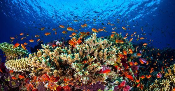 La Gran Barrera de Coral en Australia (AFP / James Cook Uiversity)