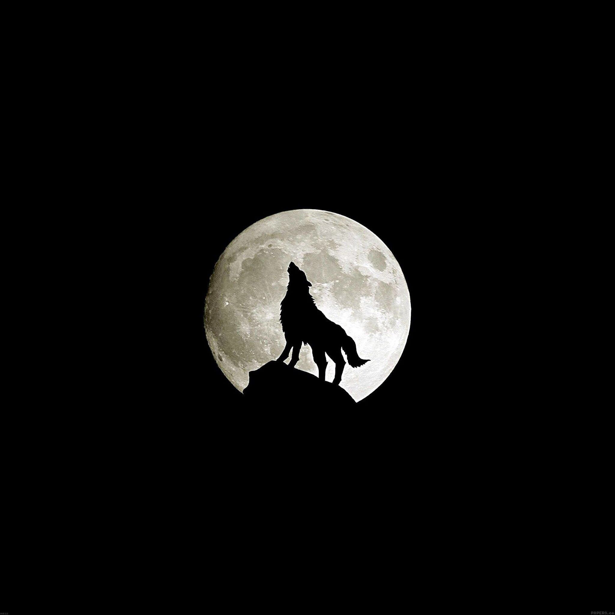 Wolf bei Vollmond *_*