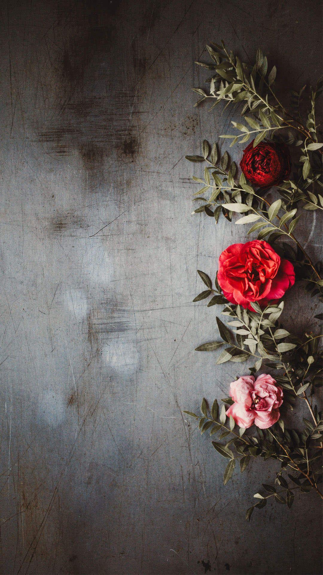 Beautiful Flower Wallpaper For Iphone Flower Iphone Wallpaper Flower Phone Wallpaper Flower Aesthetic