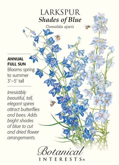 Shades of Blue Larkspur Seeds - 750 Mg - Consolida