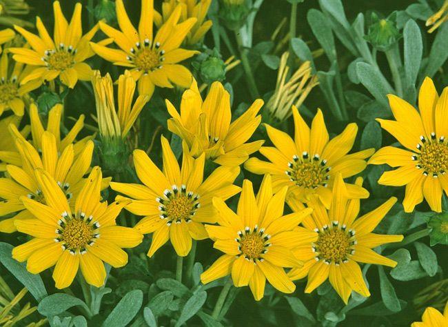 Choisir Les Fleurs Pour Jardiniere D Ete Au Soleil Rustica