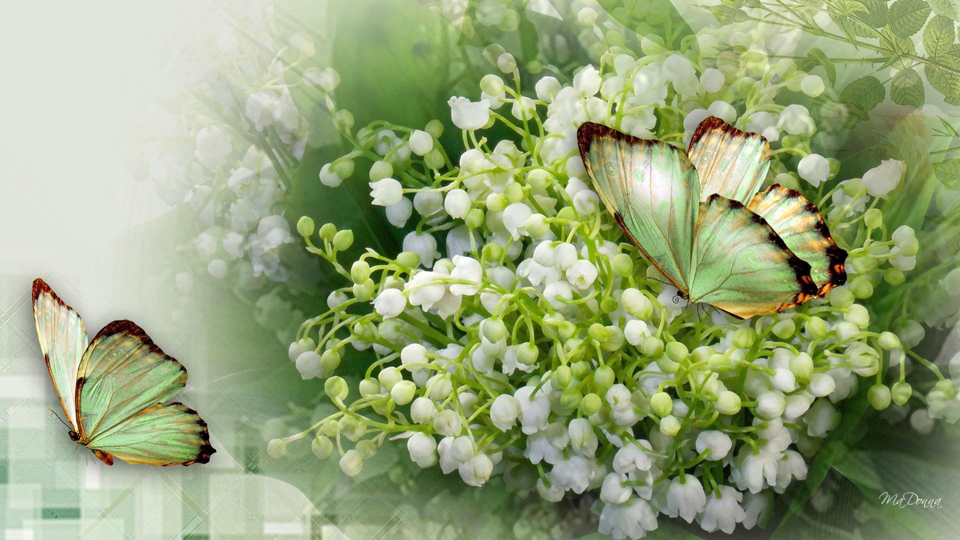 Lily Of The Valley Wallpaper FloweryWeb Lily of the