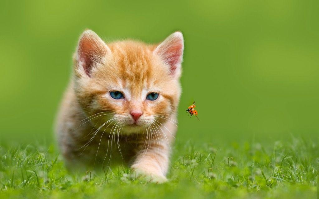 Junges Katzchen Jagt Auf Einem Marienkafer Hd Katzen Hintergrundbilder Jpg 1024 X 640 59 Dog Cat Animals Cats