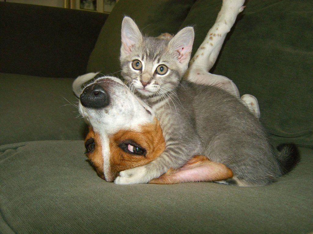 использоваться смотреть смешные животные новый выпуск какой