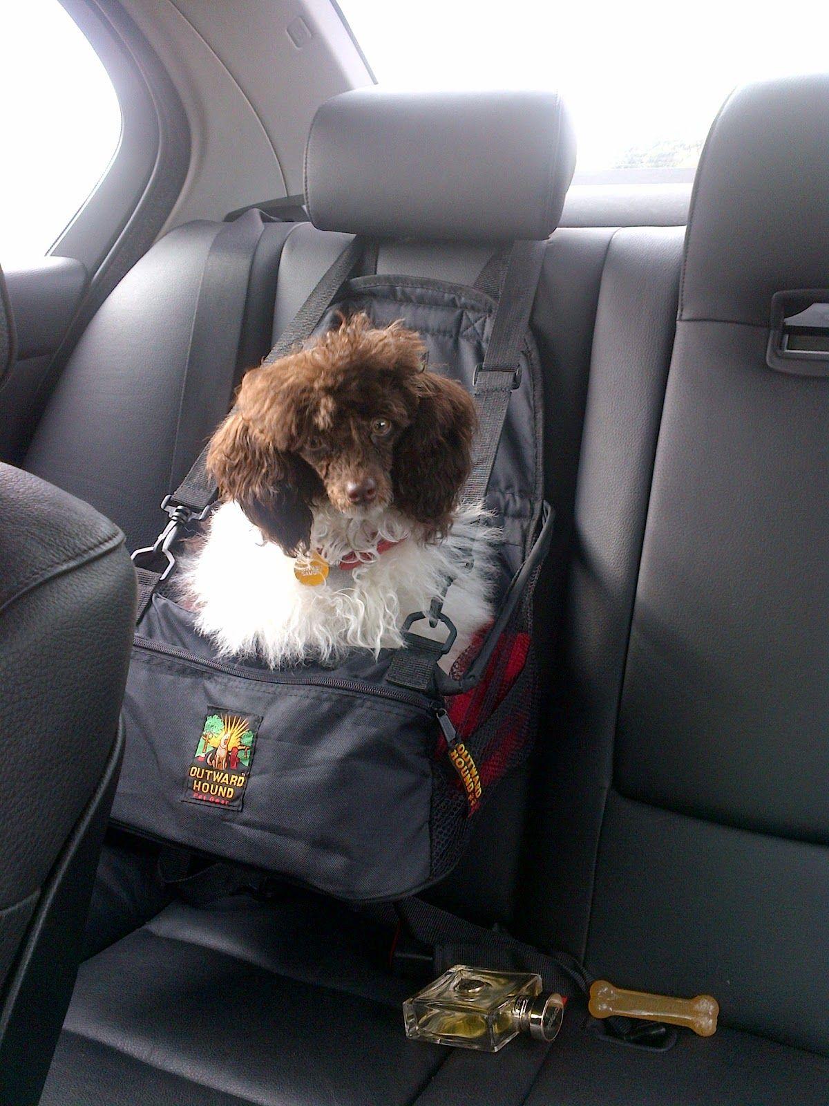 Small Dog Car Seat Great Idea