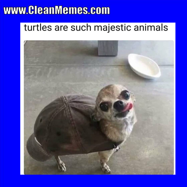 Pin by Clean Memes on Clean Memes Animals, Majestic