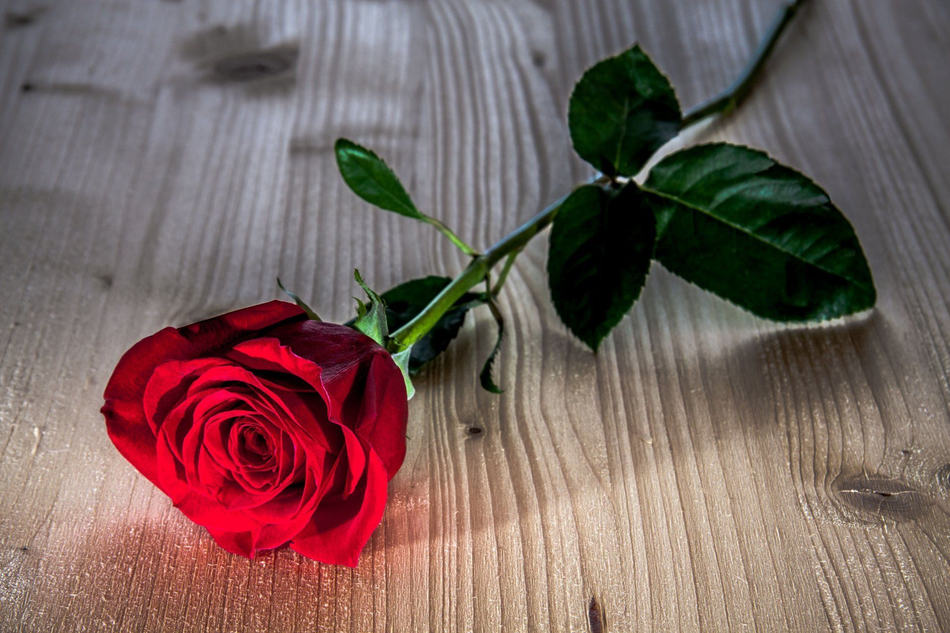 Red roses wallpaper - Red Flower Wallpaper Picture
