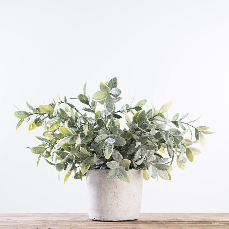 Sage Bush