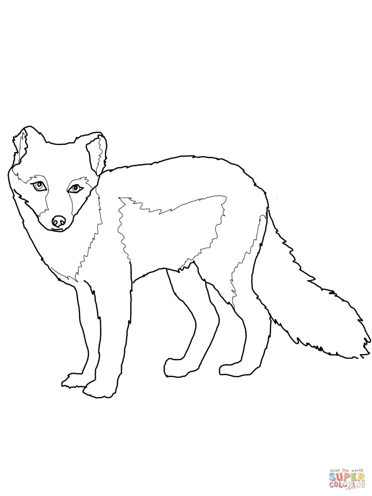 arcticfoxsummercoatcoloringpage (10×10)  fox