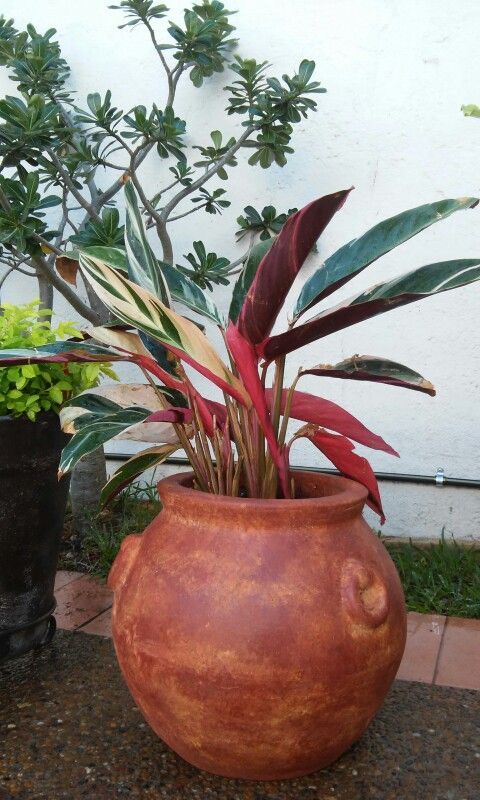 contenedor pluma jardin