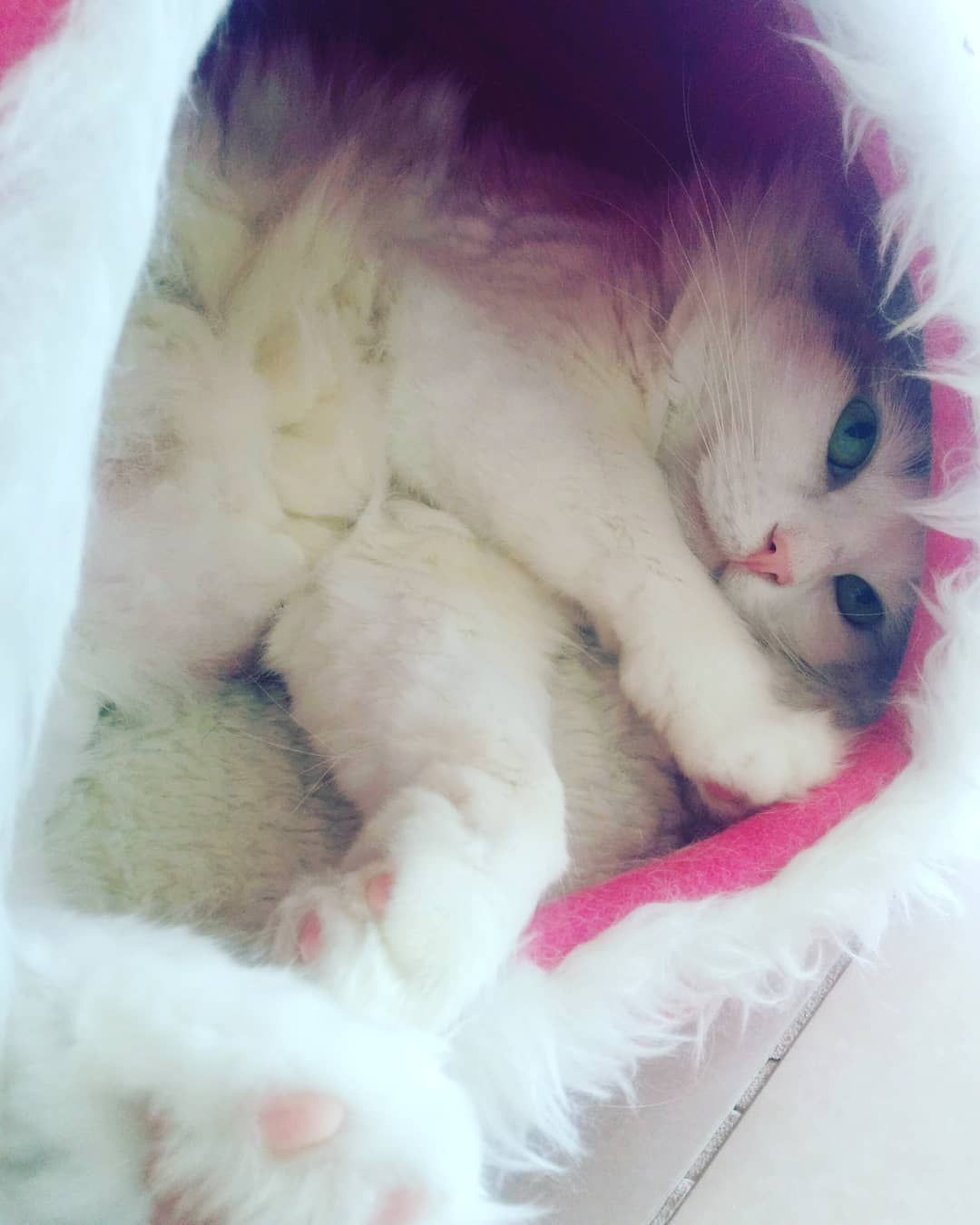 #neko #cat #katze #catfromshelter #猫 #ねこ #保険所出身