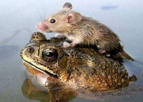 Tu es certaine que tu sais nager ? L'amitié c'est faire confiance à l'autre car il ne nous trompera jamais.