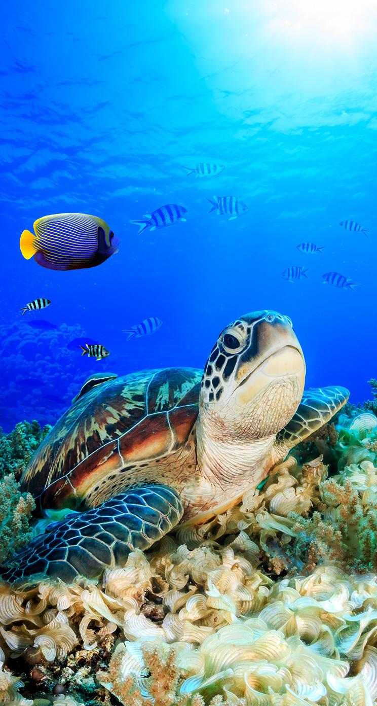 Pin By Simone Freitas On Summertime Screensavers Sea Turtle Pictures Sea Turtles Photography Baby Sea Turtles