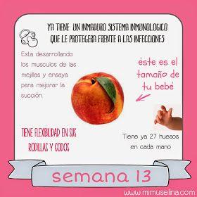 726885c9b BebeBlog by mimuselina  Semana 13 embarazo. Tamaño y evolución del bebé   mimuselina