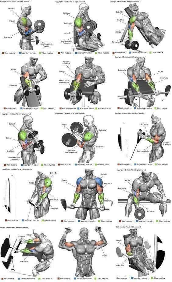 Pingl par hassani hichem sur sport and health exercice entrainement musculation et exercice - Entrainement piscine pour maigrir ...