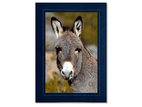 Wild Burro Cards Young Burro In Desert Card Wild Donkey Cards
