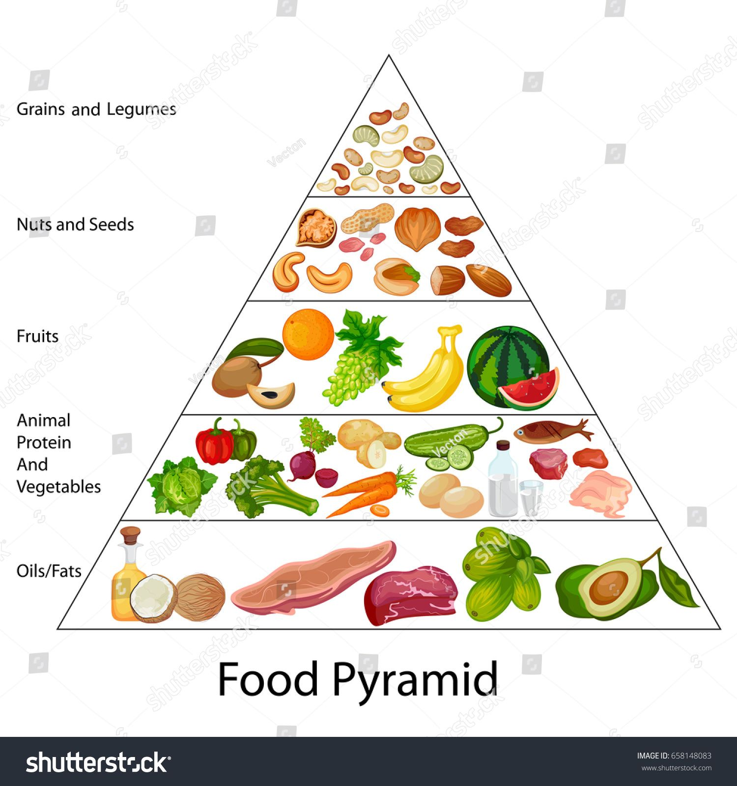 Education Chart Of Biology For Food Pyramid Diagram Vector Illustration Sponsored Sponsored Biology Food Educ Food Pyramid Food Education Animal Protein