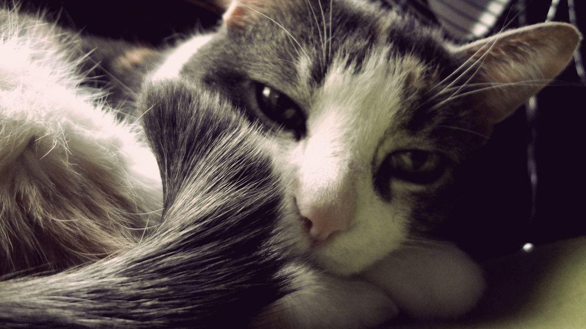 Sleepy Kitty - Imgur