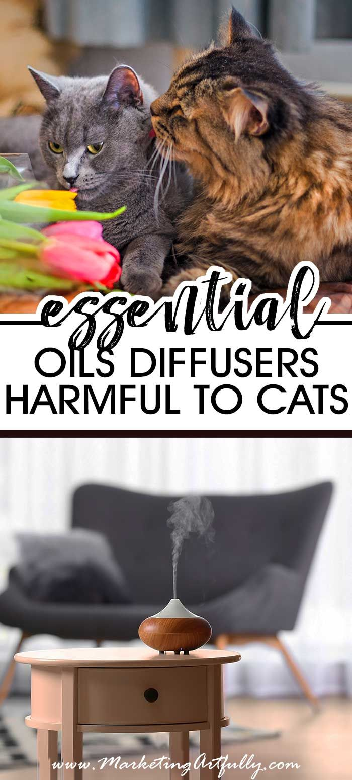 Warning! Essential Oil Diffusers Are Harmful To Cats Are